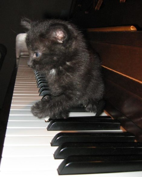 Kitten checks out piano for the first time