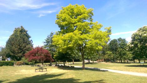 Brilliant Green Oak Tree
