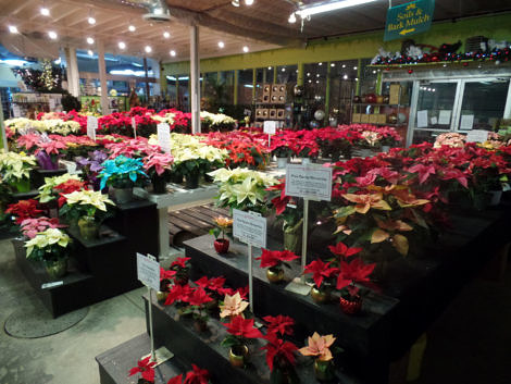 Christmas in the garden centre