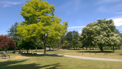 Spring Trees in Sardis Park