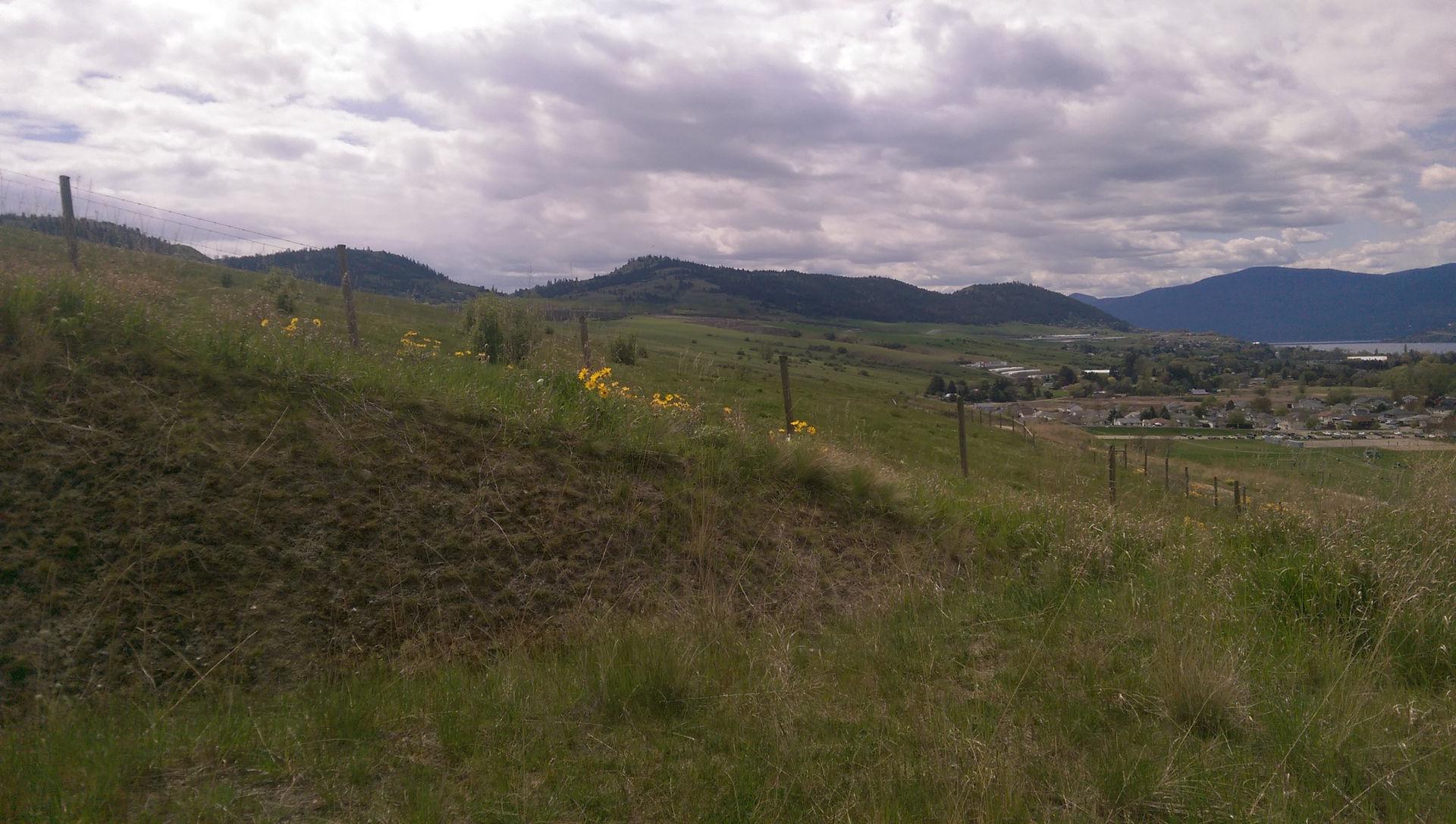 Vernon grasslands