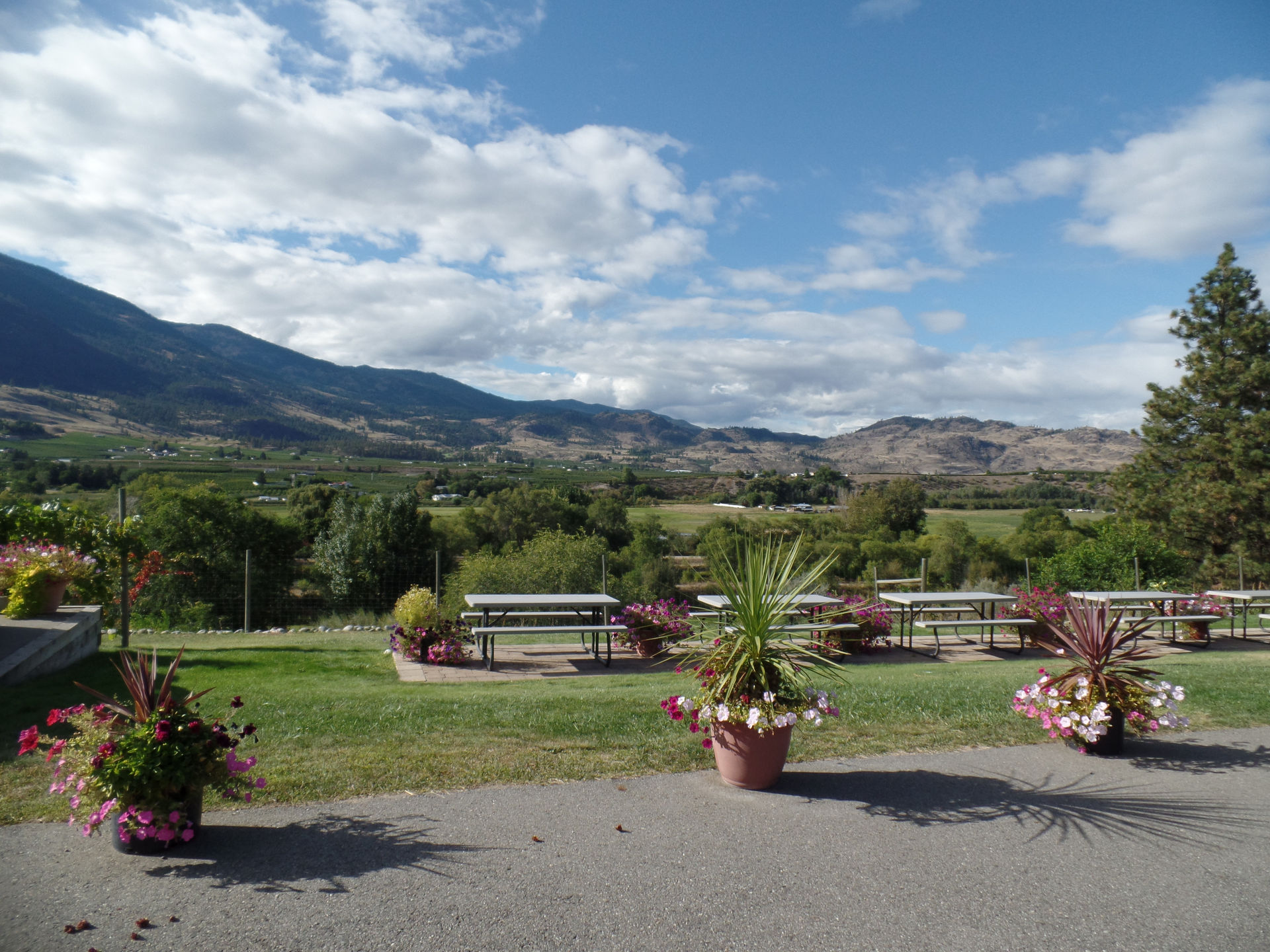 View from Oliver Twist Estate Winery