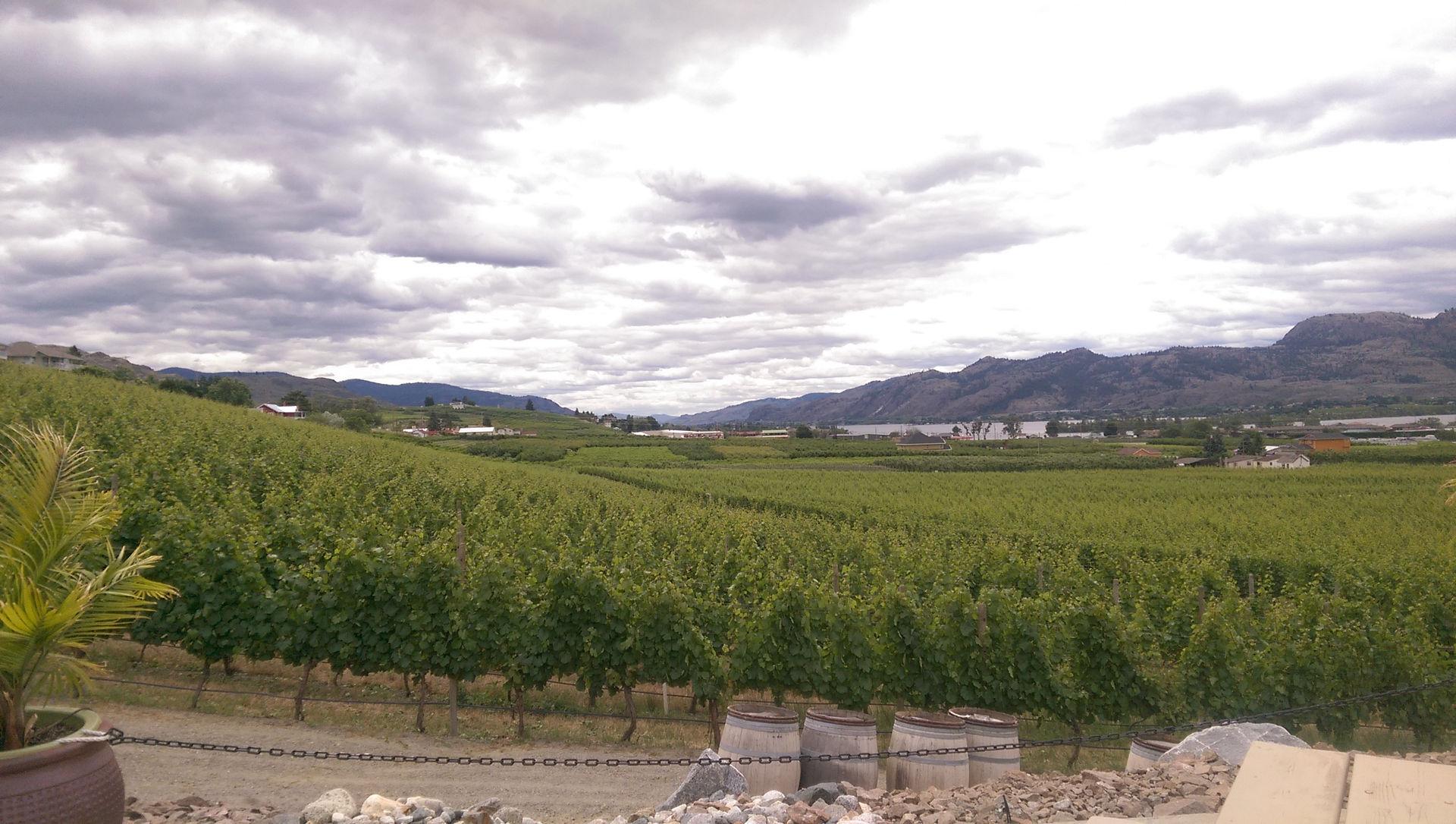 Vineyard at Adega Estate Winery