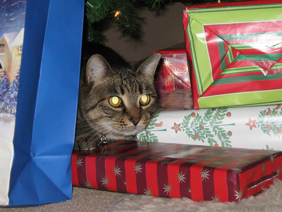 Christmas is for Cats
