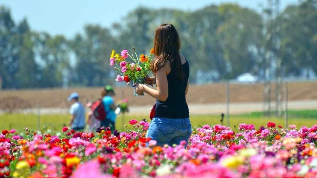 Girl Picking Colourful Flowers in a Park