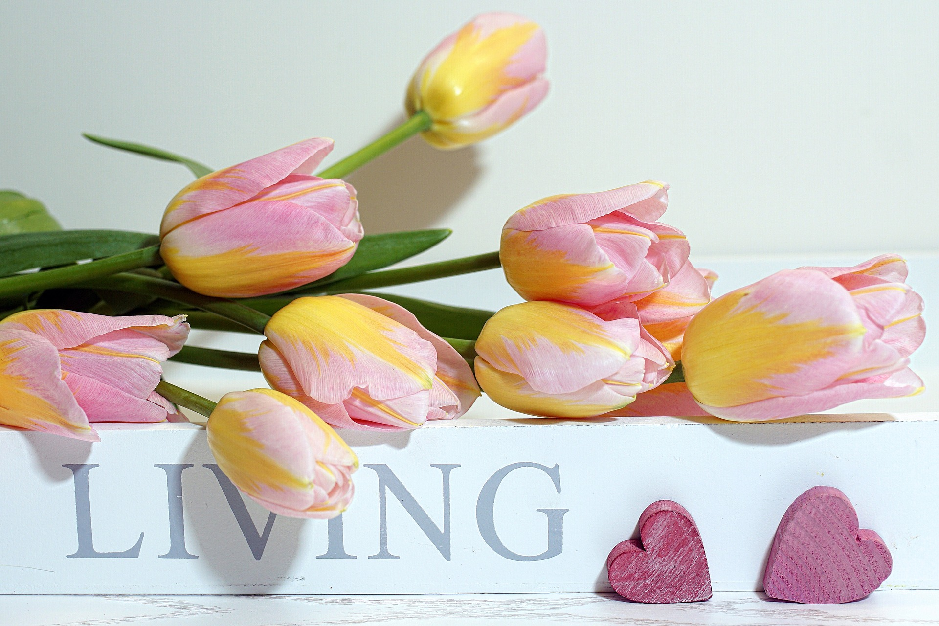 Pastel Pink and Yellow Tulips