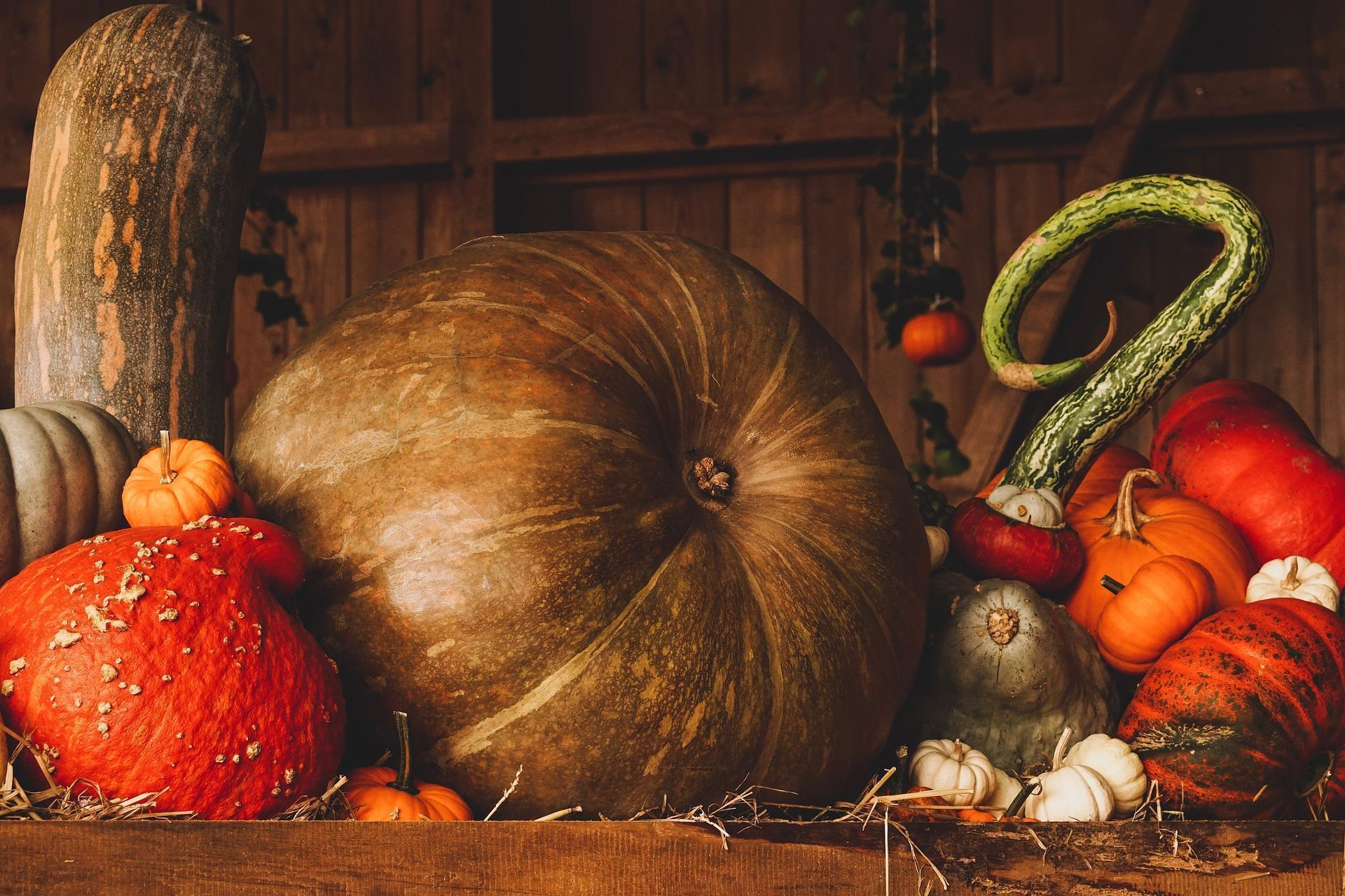 Pumpkins and Squash Still Life