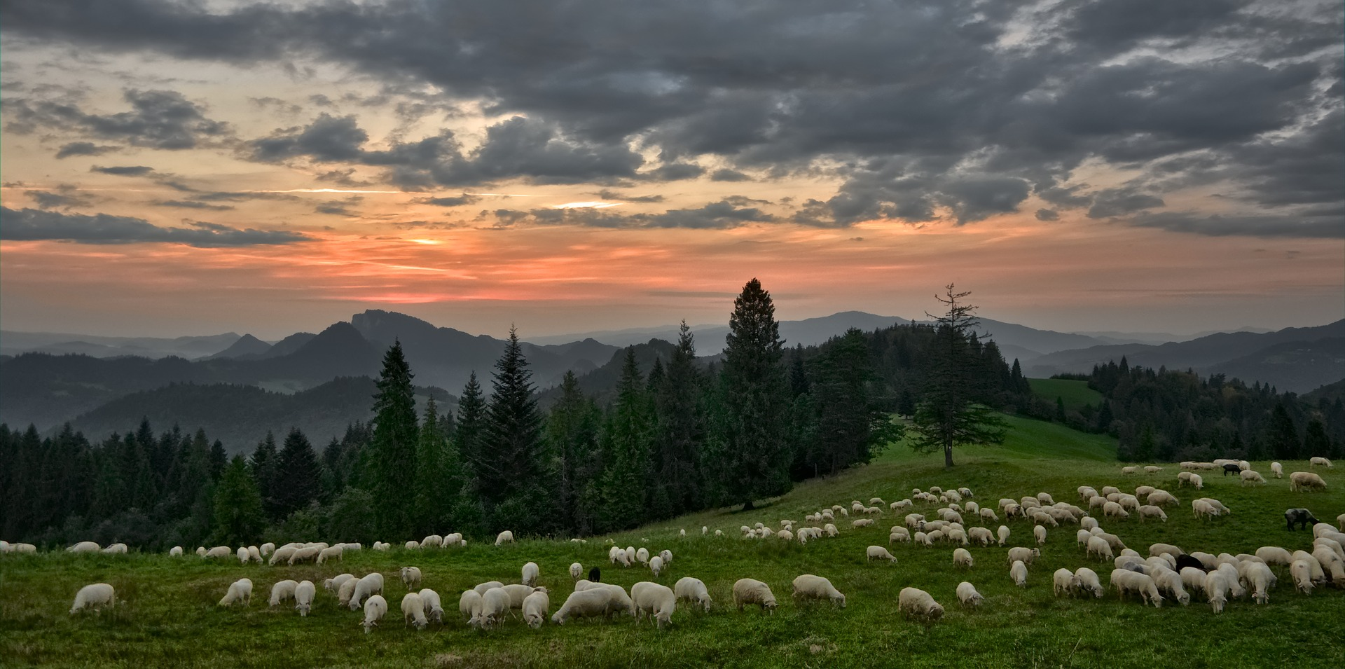 Sheep Grazing in the Mountains at Sunset