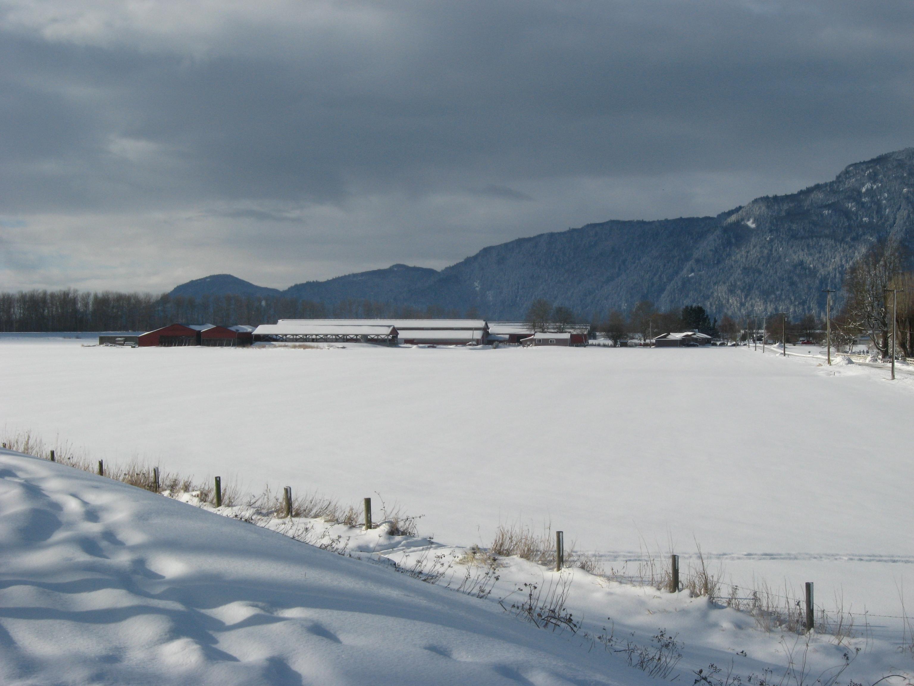 Snow Covered Farmland in Chilliwack BC