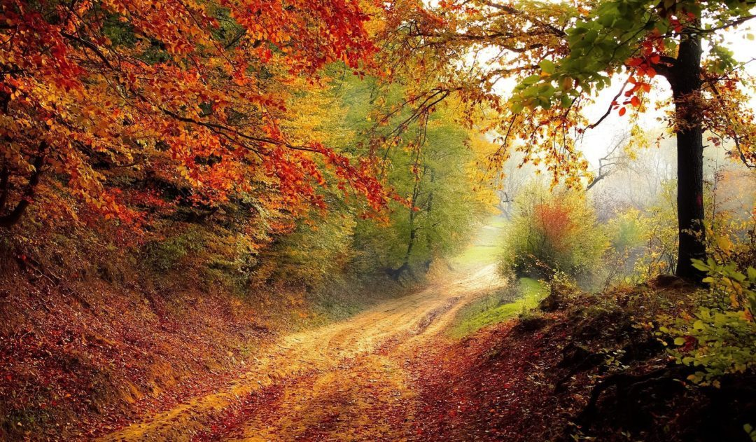 Surreal Autumn - Dirt Road on a misty morning