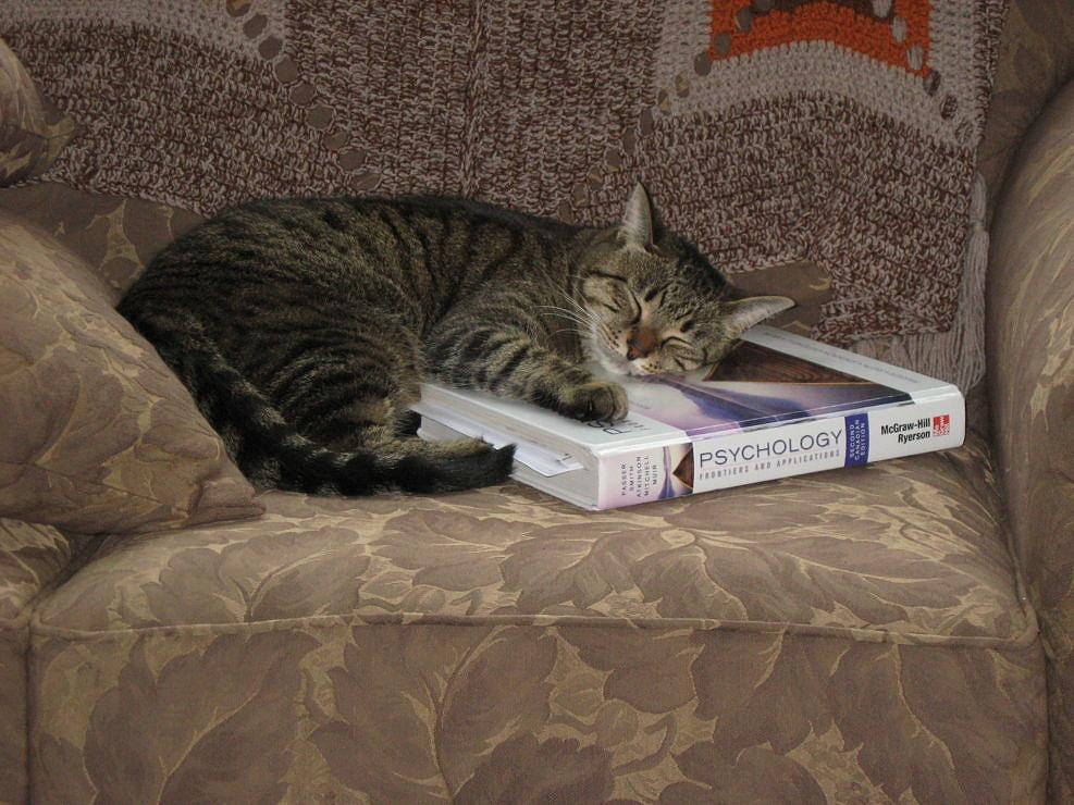 Tabby Cat Learns While Sleeping